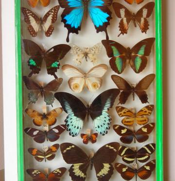 Casa Scaglione, si prolunga al 30 novembre mostra di farfalle e insetti esotici