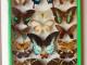 Farfalle recto